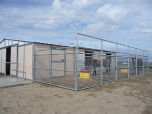 Mesh Combo Gate in paddock with Noble Trainer Series Barn